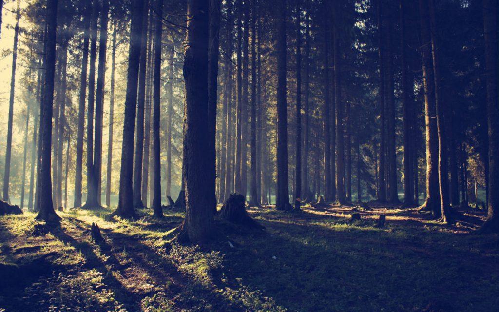 Deep Dark Carpathian Forest